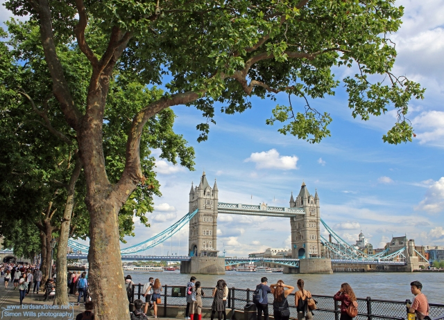London planes at Tower Bridge
