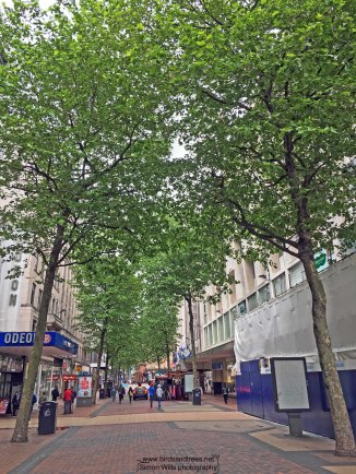 Brummies have the London plane too